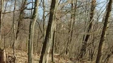 Šuma Utolica